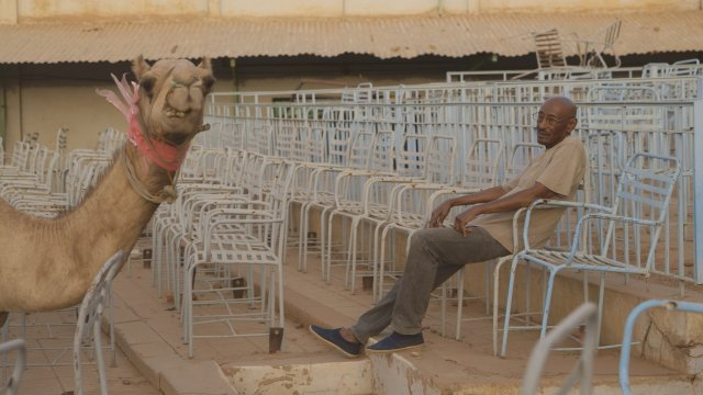 Man sits amongst rows of empty chairs while a llama stands nearby
